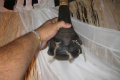 deadhead-rum-tiki-caliente-2013-77