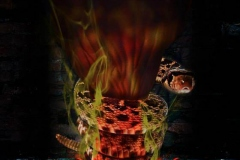 deadhead-rum-ohana-2014-3